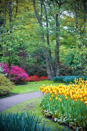 Beautiful flower lawn in Keukenhof garden, Holland Stock Photo - 18756646