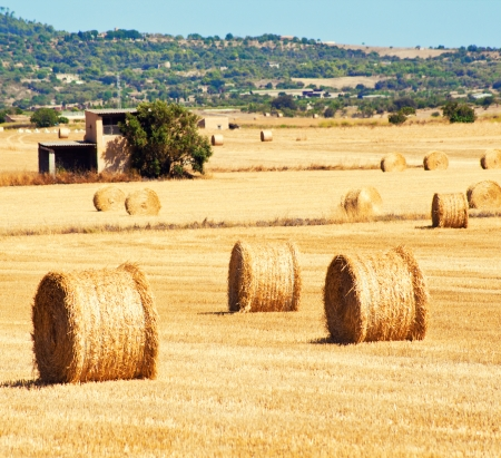 Landscape with straw bales, Mallorca, Balearic island, Spain photo