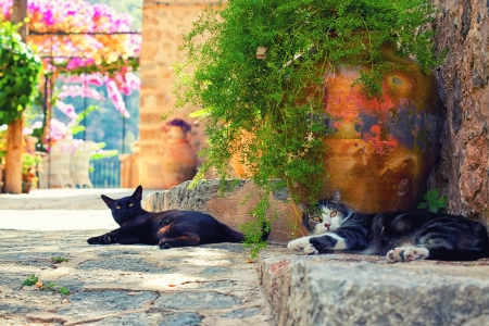 Cats in Deia village, Mallorca, Baleares, Spain