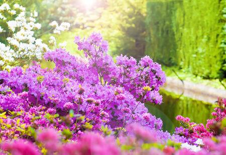 holiday display: Beautiful spring flowers in Keukenhof garden, Holland