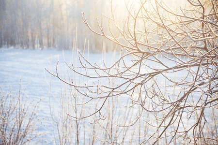 frozen winter: Winter forest with frozen brunches in sunlight Stock Photo