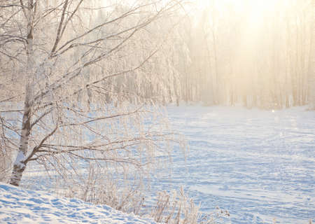 brunches: Winter forest with frozen brunches in sunlight Stock Photo