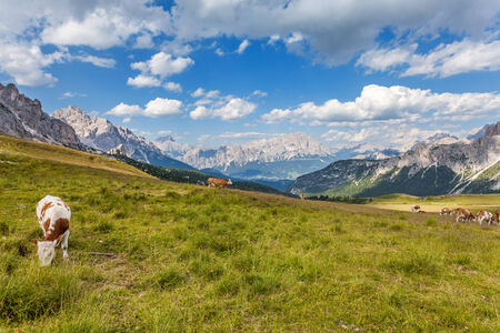 Pasture high in the mountains - Dolomites, Italy photo