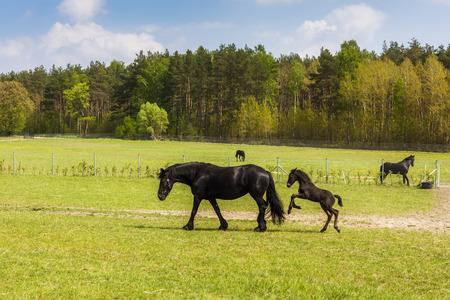 mini farm: Horses on green pasture