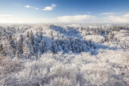 atracci�n: Atracci�n tur�stica - torre sobre el bosque de invierno