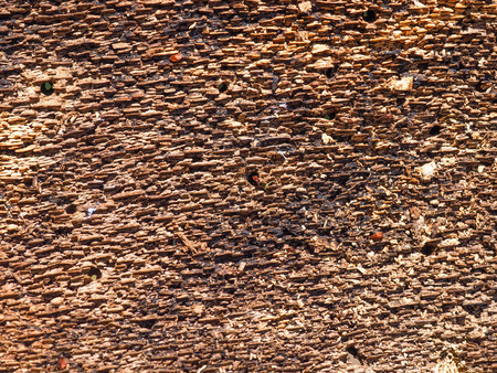 Bark of the tree from inner side with holes made by woodworms Banco de Imagens