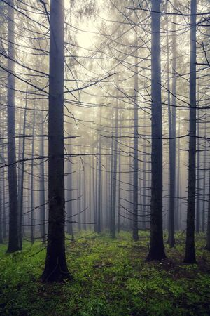 A dreadful forest in the fog