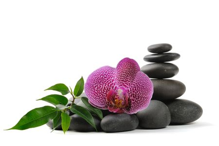 red orchid: Pink orhid and stones on the white background