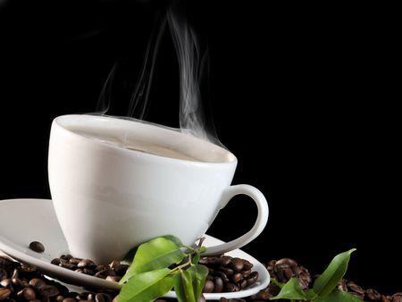 planta de cafe: caf� caliente y el grano de caf�