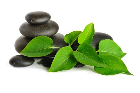 black pebbles: Zen stones and plant on the white background
