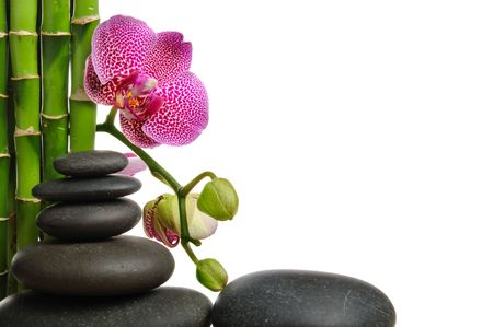 Pink orhid and stones on the white background photo