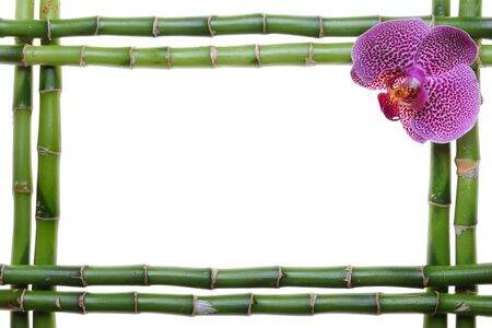 orchid tree: Bamboo frame and orchid on the white background
