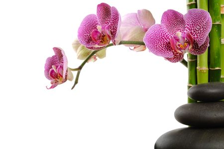 red pebble: Pink orchid and stones on the white background Stock Photo