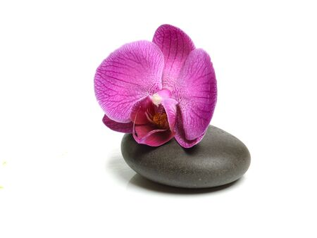 pink orchid: Pink orchid and stones on the white background Stock Photo