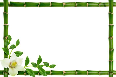 orchid tree: spa frame on the white background Stock Photo