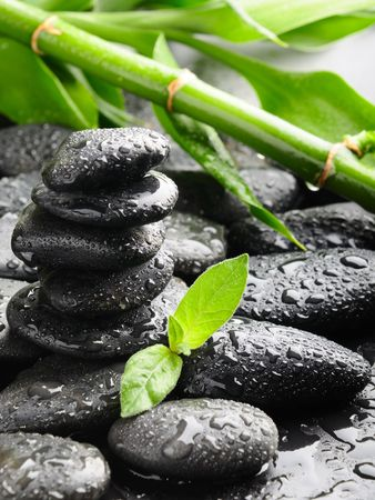 black zen stones and plant in water Stock Photo - 7641296