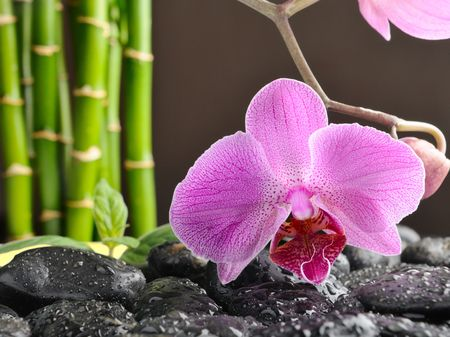 spa concept with orchid and black stones  photo