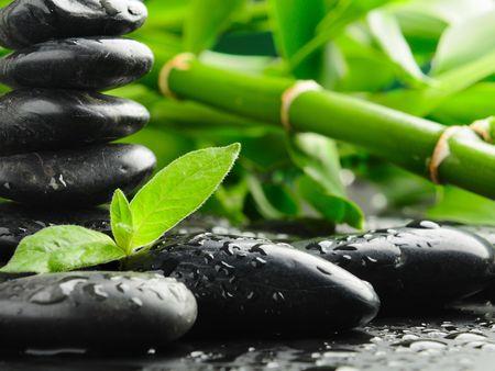 black zen stones and plant in water