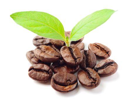 los granos de café y hoja en el fondo blanco  Foto de archivo