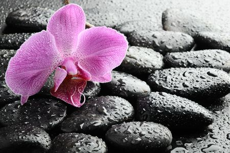 black zen stones and pink orchid with drops Stock Photo - 7641310