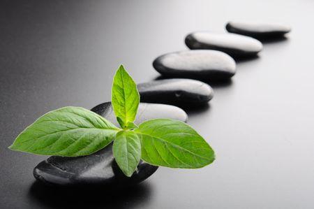 black pebbles: Zen stones and plant on the black background Stock Photo