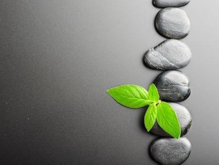 piedras zen: Piedras de Zen y planta sobre el fondo negro  Foto de archivo