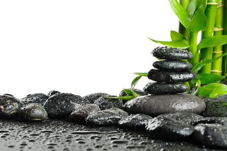 black stones and green plant with drops Stock Photo - 7826833