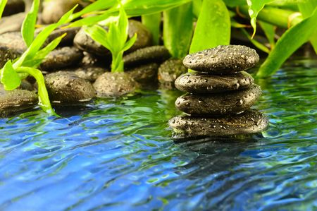 river stones: black stones and green plant with drops