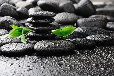 black stones and green plant with drops photo