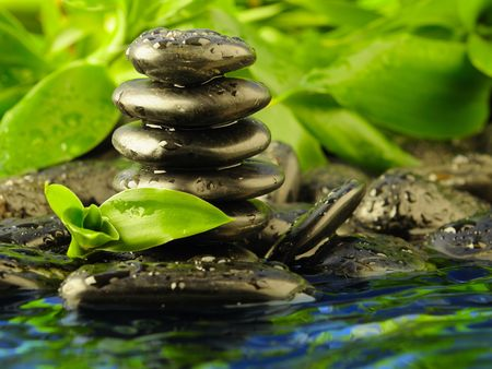 zen water: black stones and green plant with drops