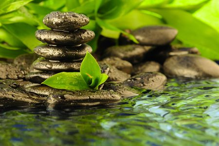 black stones and green plant with drops Stock Photo - 7826871