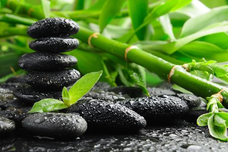 dews: black stones and green plant with drops