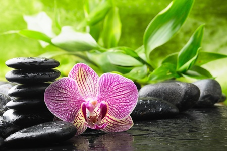 zen rocks: zen stones and pink orchid in the water Stock Photo
