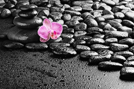 zen stones and pink orchid in the water Stock Photo - 8786531