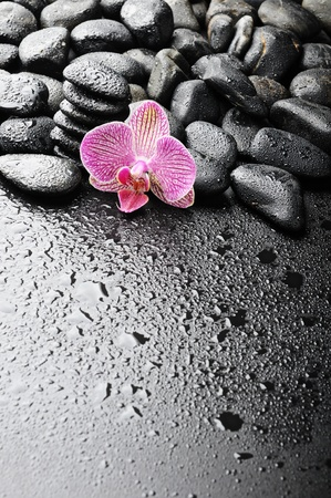 zen stones and pink orchid in the water Stock Photo - 8786530