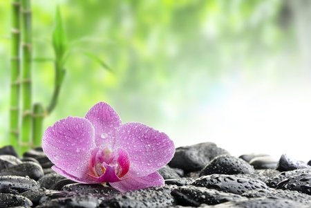 labourer: zen stones and  orchid in the water Stock Photo