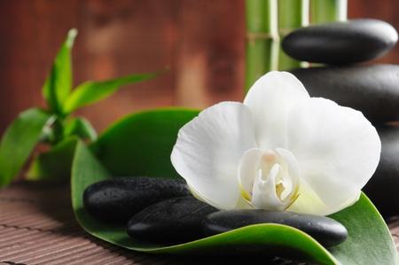 spa concept zen basalt stones and  orchid photo