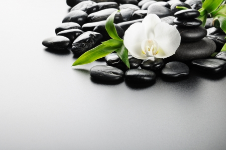 zen stones and  orchid on the black Stock Photo - 8786508
