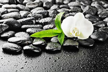 piedras zen: piedras de Zen y la orqu�dea blanca en el agua