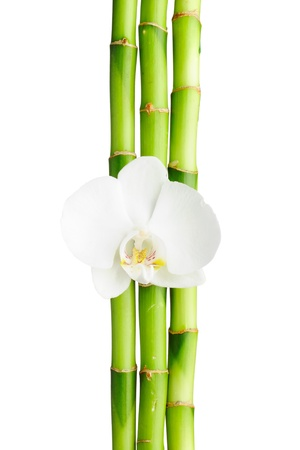 Bamboo frame and orchid on the white background Stock Photo - 8786491