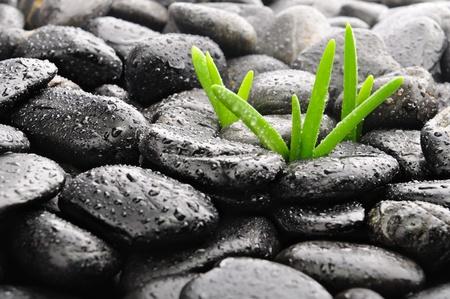obrero:  piedras de Zen y bamb� en el negro