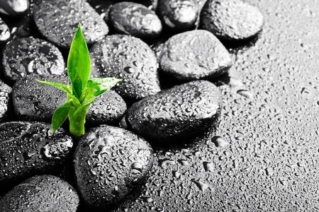 pierres Zen et bambou sur le noir Banque d'images