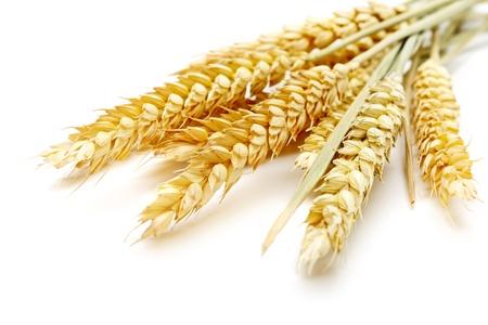 cereals: trigo sobre el fondo blanco Foto de archivo