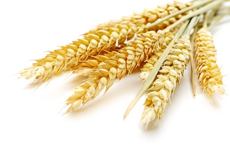 armful: wheat on the white background