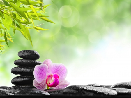 zen spa: zen basalt stones and orchid with dew Stock Photo