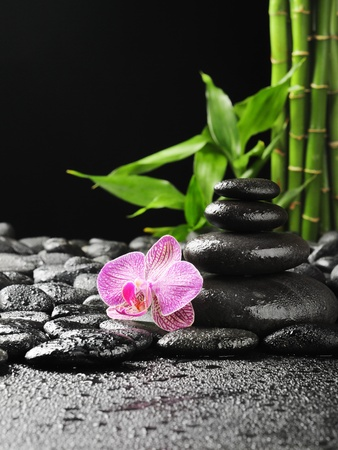 pink orchid on the black zen stones photo