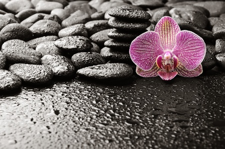 massage symbol: basalt stones with orchid after rain Stock Photo