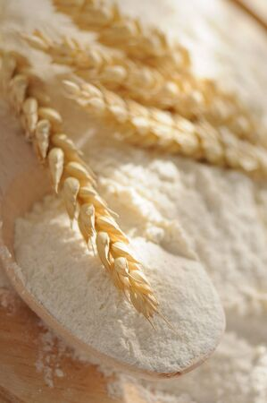 corn flour: whole flour and wheat ears on the wooden table Stock Photo