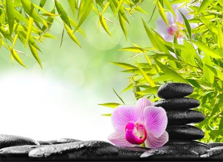 zen steine: Spa-Konzept mit Zen Steinen und Orchideen