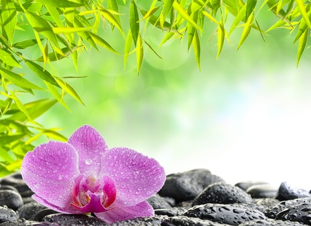 massage stones: spa concept with zen stones and  orchid
